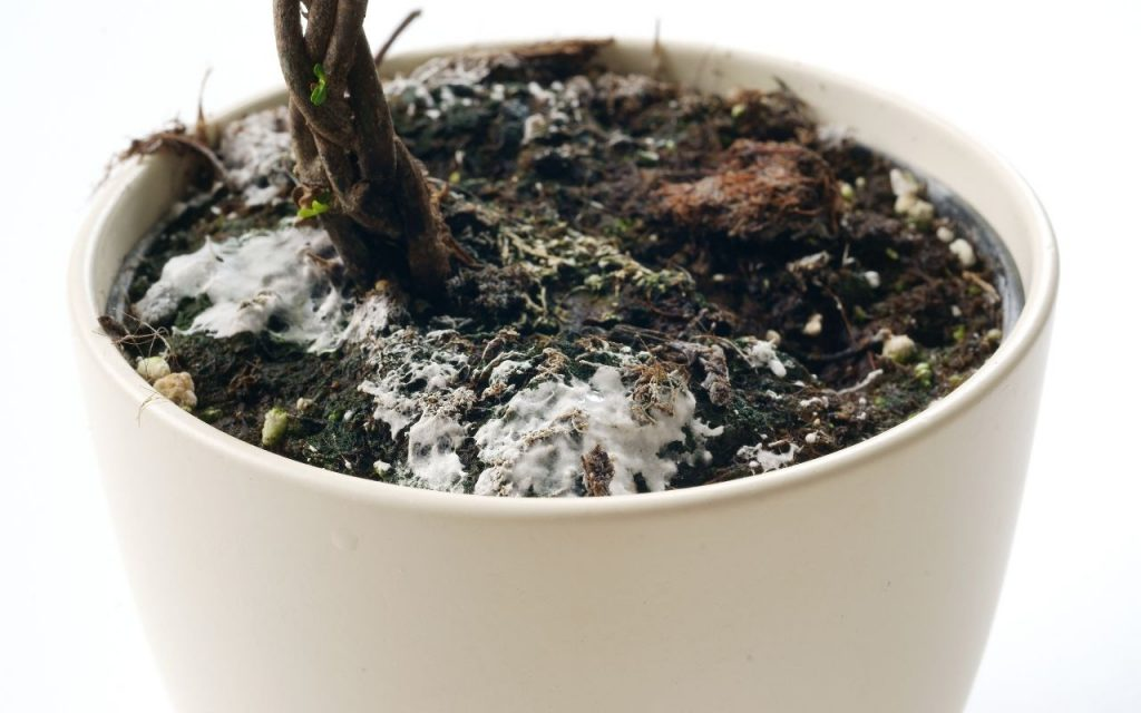 Mildew on a plant